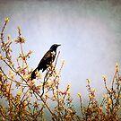 Vogel auf einem Baum von Milena Ilieva