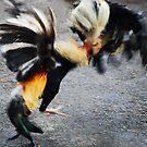 Cock fight on Bali by Michael Brewer