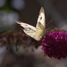 Butterfly Buddy by Sue Tyler