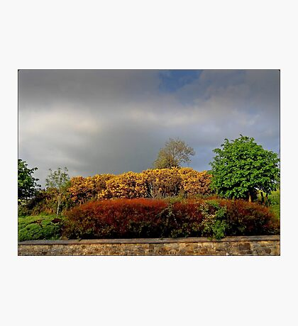 Autumnal Hedgerow Photographic Print