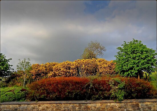 Autumnal Hedgerow by Julesrules