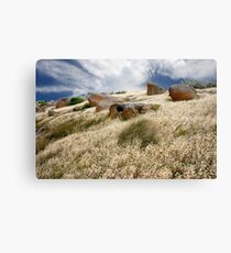 Grass tails among the granite Canvas Print