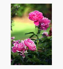 Nature`s Romance 02 (Colour) Photographic Print