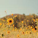 Many Flowers by Stephanie Newton