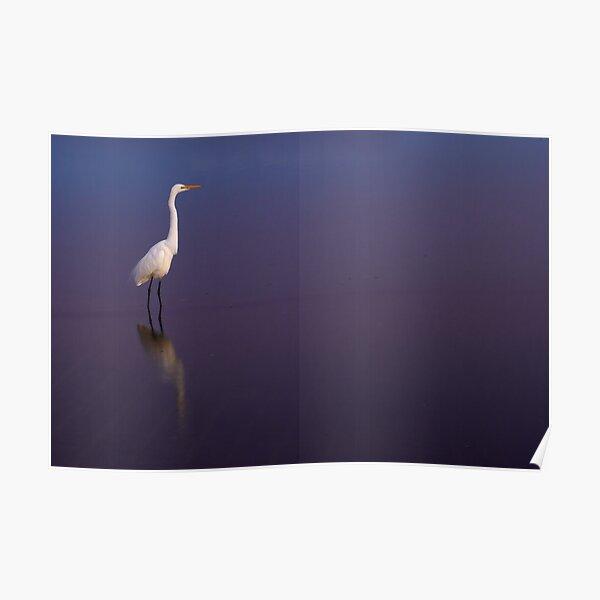 White on blue Poster