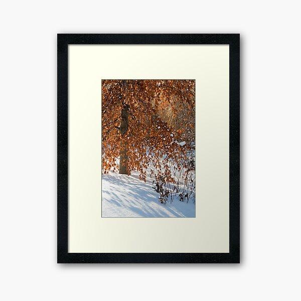 Even in Winter  Framed Art Print