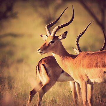 Antelope by mattstreatfeild