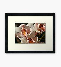 Orchids 001 Framed Print