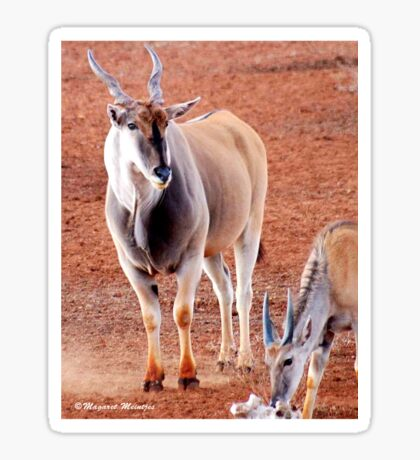 THE ELAND BULL AND YOUNG BULL CALF – Taurotragus oryx – Eland koei en kalf Sticker
