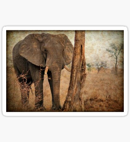 ALL IN AUTUM - WHEN IS SPRING? - THE AFRICAN ELEPHANT -Loxodonta Africana Sticker