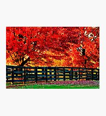 Kentucky Wooden Fence with Maples Photographic Print