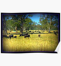 Cows in the country Poster