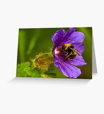 The Pollen Collector Greeting Card