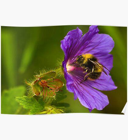 The Pollen Collector Poster