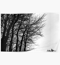 Trees on winter Poster