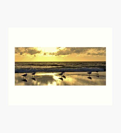 Seagull Sunset Strut Art Print