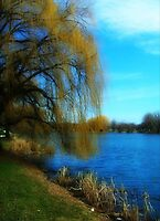 My Weeping Willow Tree ©  by Dawn Becker