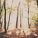 Magic Light by jrenner