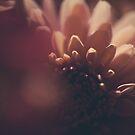 dark flower by jrenner