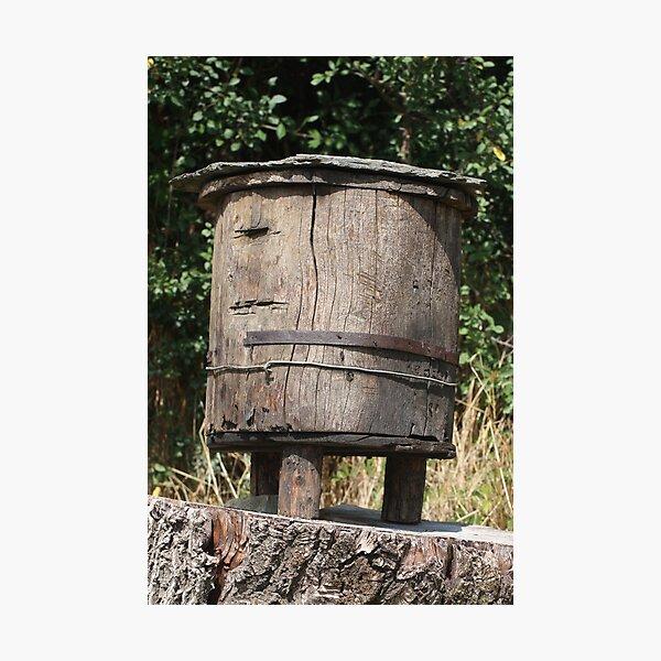 trunk beehive Photographic Print