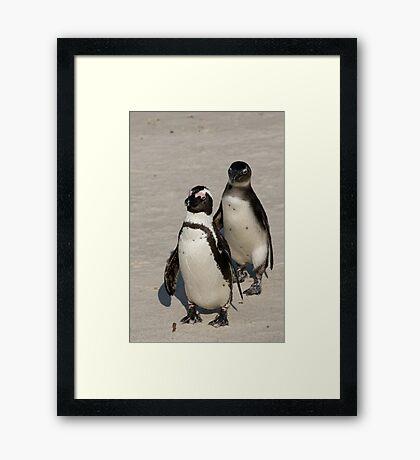 African Penguins (formerly known as Jackass Penguins) Framed Print