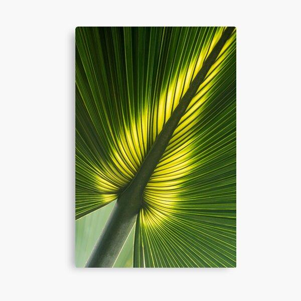 Glowing palm leaf Canvas Print