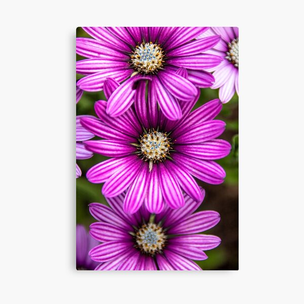 Nature's details Canvas Print