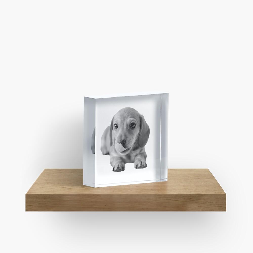 Little Cute Dachshund Puppy Acrylic Block
