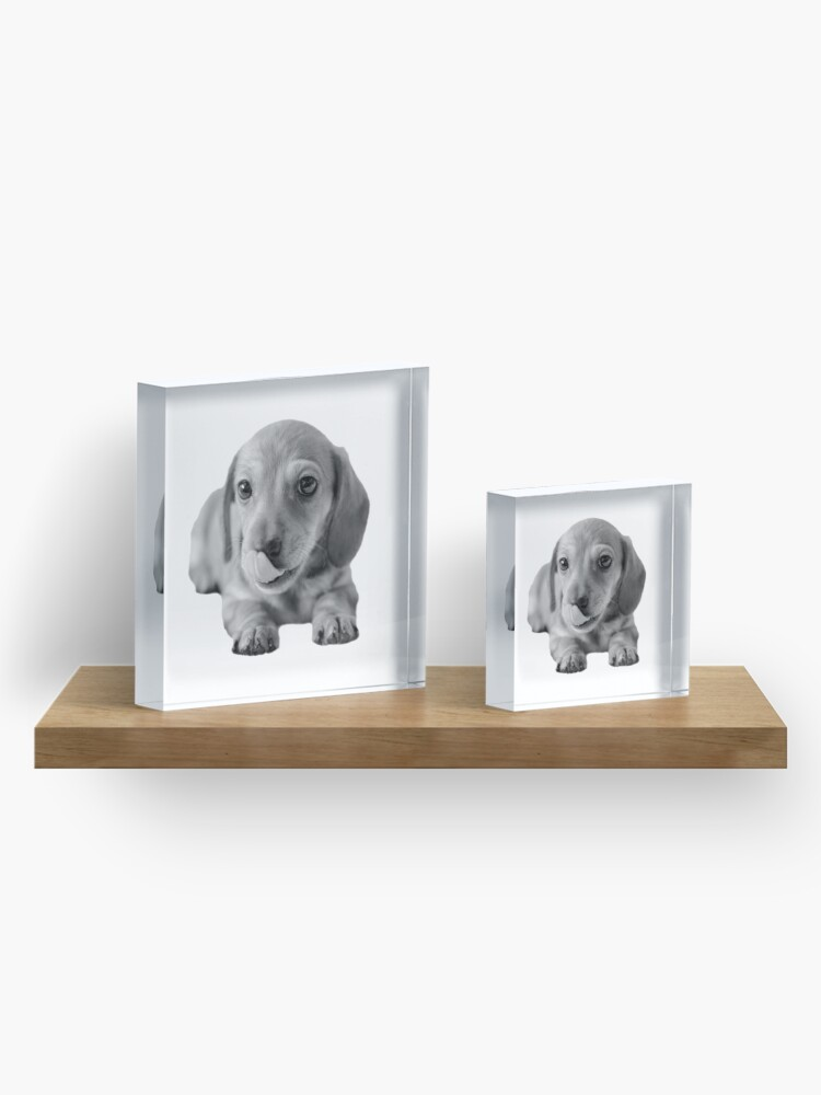 Alternate view of Little Cute Dachshund Puppy Acrylic Block