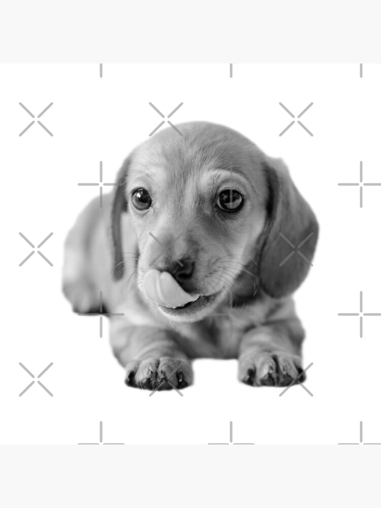 Little Cute Dachshund Puppy by tribbledesign