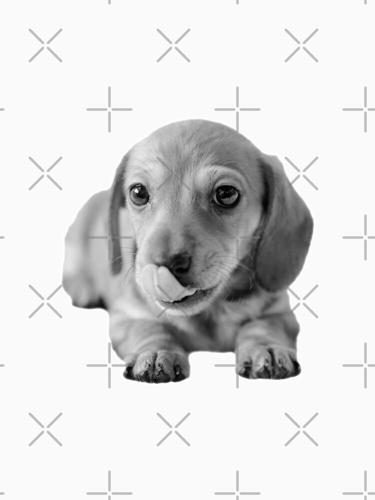 Little Cute Dachshund Puppy by tribbledesign