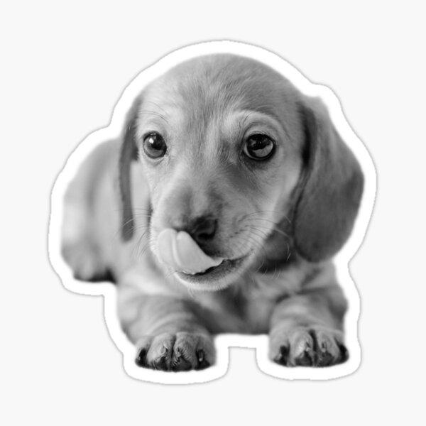Little Cute Dachshund Puppy Sticker