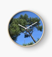 Zypresse wächst schief auf Felsen Uhr
