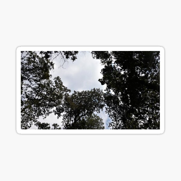 Forest Canopy With Opening Sticker