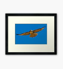 082810 Red Tailed Hawk Framed Print
