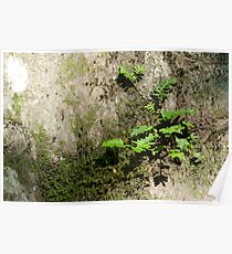 Resurrection Fern Poster