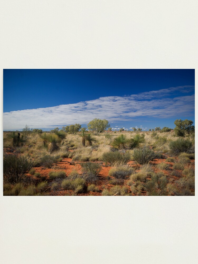 Alternate view of Canning Grass Trees Photographic Print