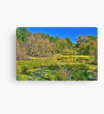 Swamp land (View Large) Canvas Print