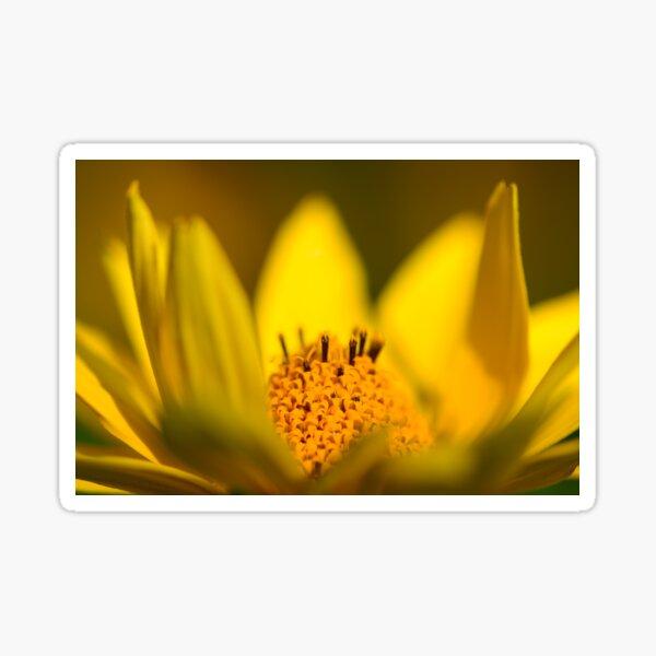 False Sunflower (Heliopsis helianthoides) Sticker