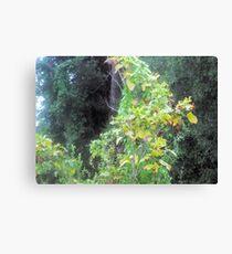 RAW NATURE Canvas Print