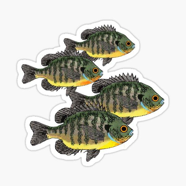 Bluegill Sunfish School Sticker