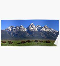 Bison Herd Panorama Poster