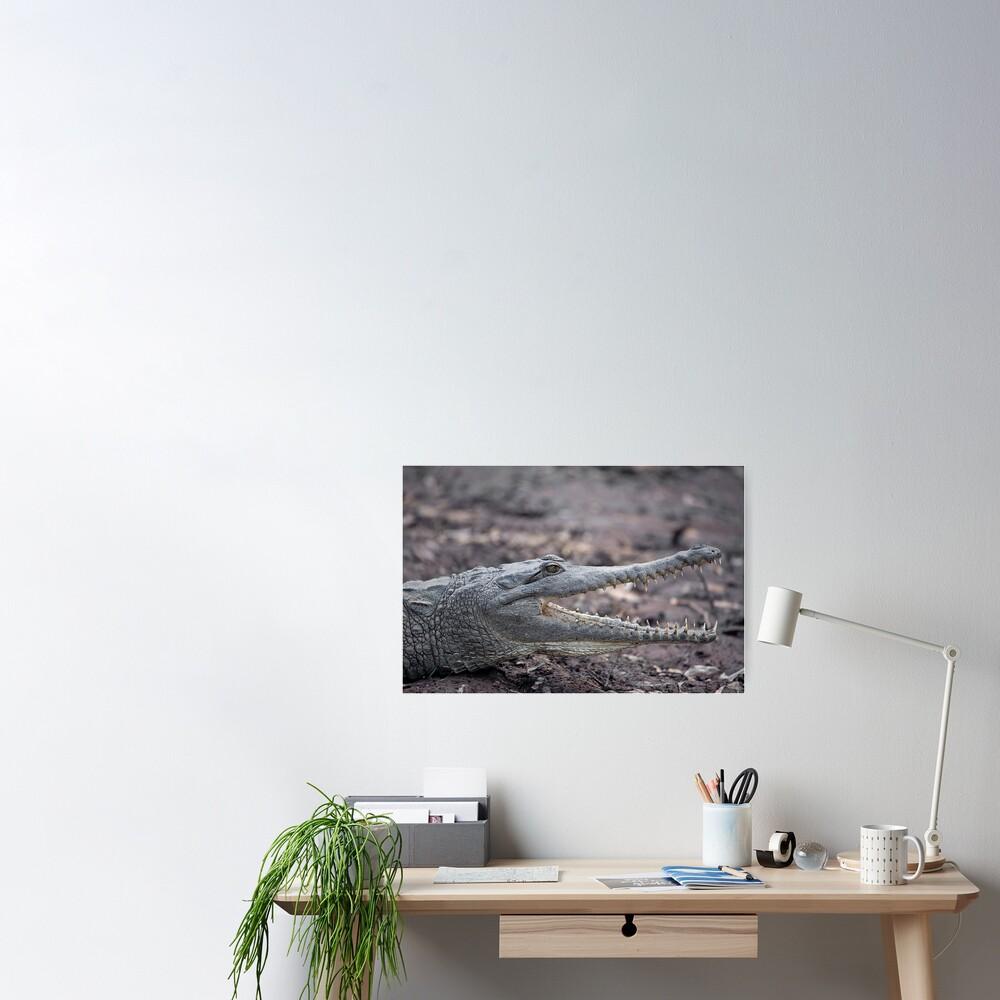 Johnstone River Crocodile Poster