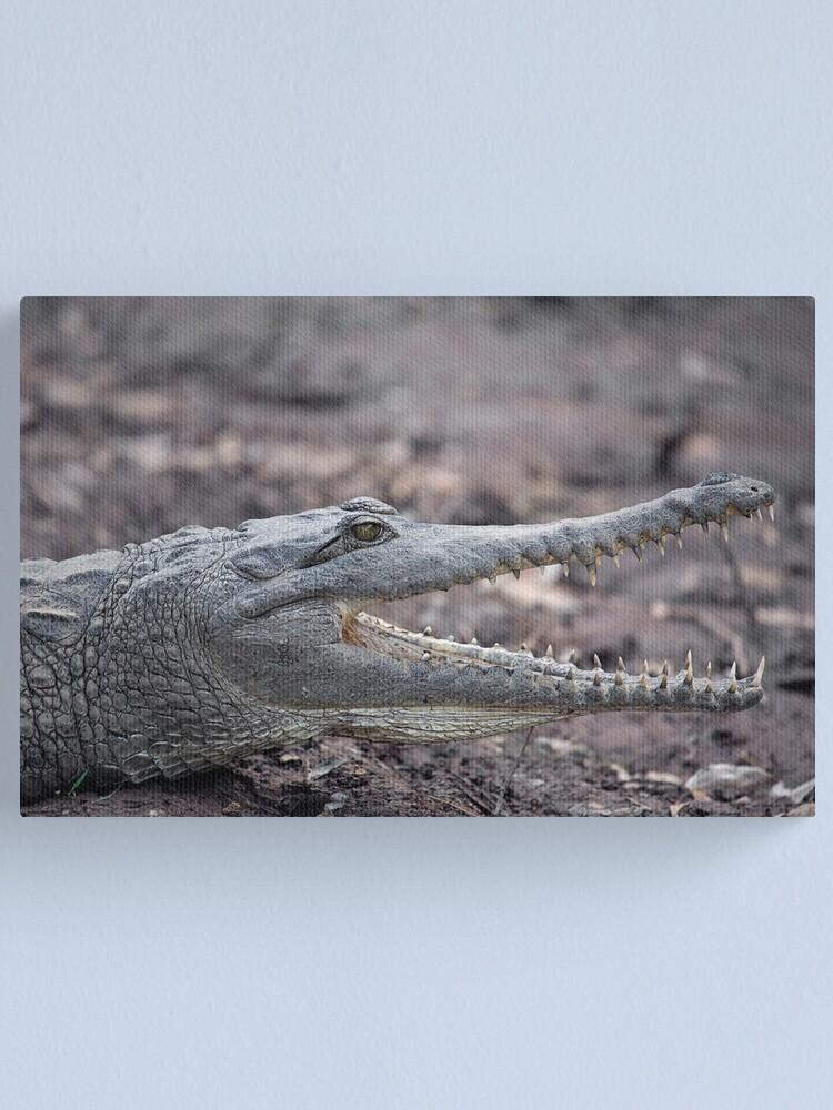 Alternate view of Johnstone River Crocodile Canvas Print