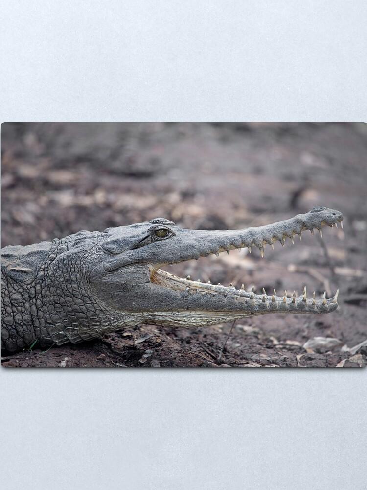 Alternate view of Johnstone River Crocodile Metal Print