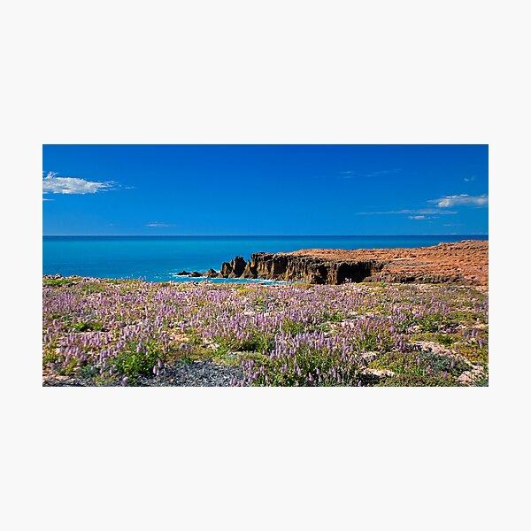 Mulla Mulla by the Sea Photographic Print