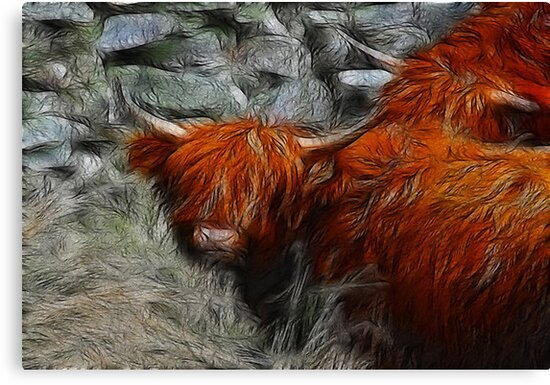 Highland Bulls by Trevor Kersley