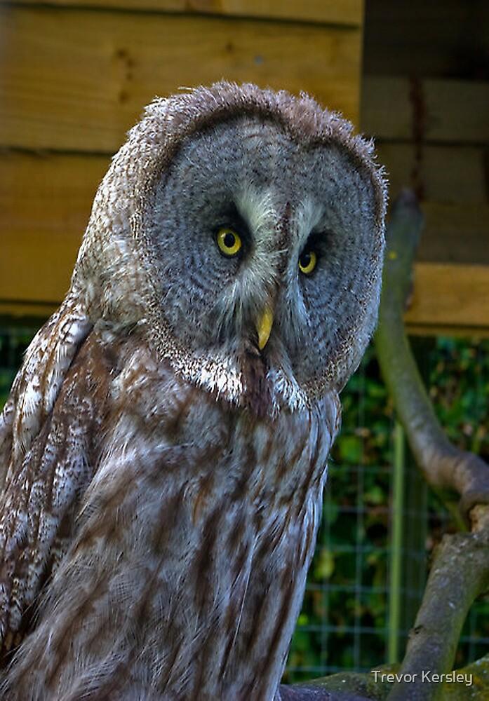 Owl #3 by Trevor Kersley