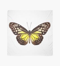 """Butterfly species Parantica aspasia common name """"Yellow Glassy Tiger"""" Scarf"""