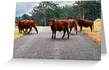 Outback Cows  by Rob D